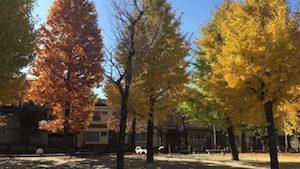 Parco in autunno Kyoto