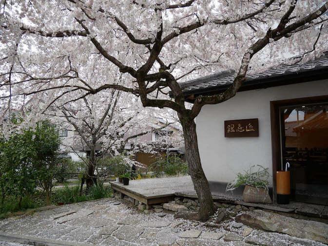 Sakura al sentiero del filosofo